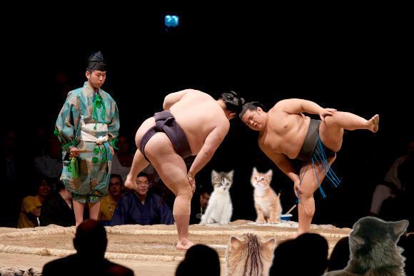 Sumo Cats