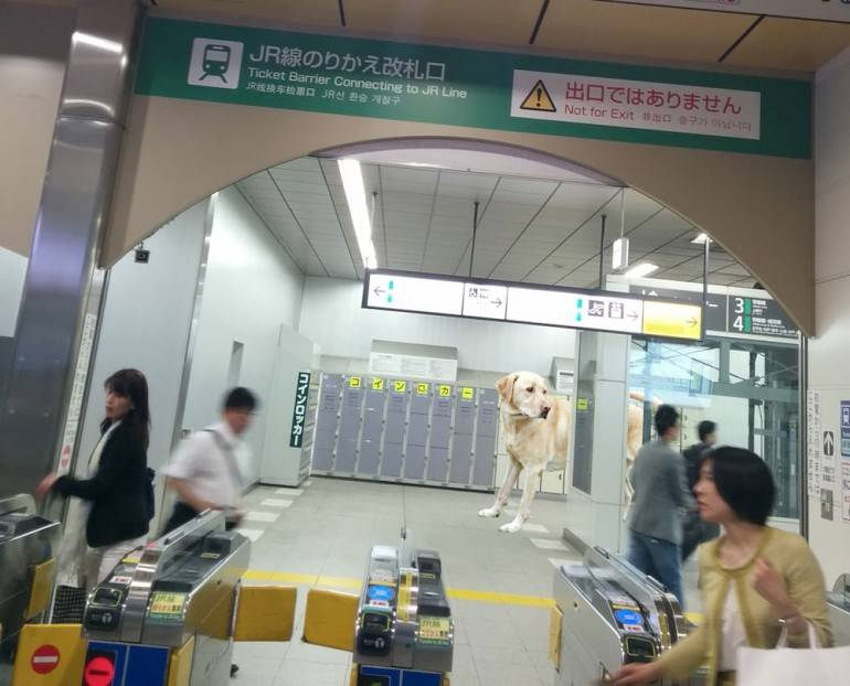 JR transfer gate nippori