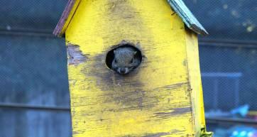 SquirrelParkTC5