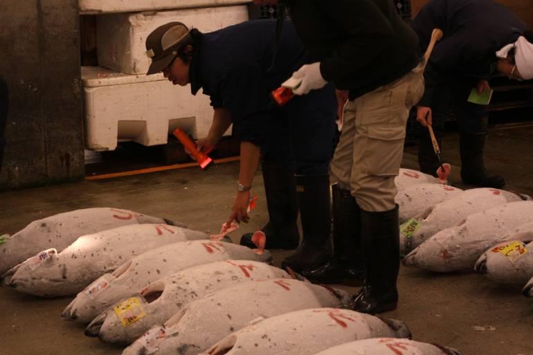 tuna-auction-4