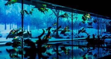 art-aquarium
