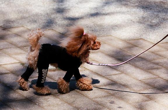 Dog in Yoyogi Park