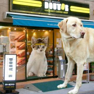 Doutor for Dogs