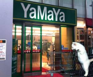 Cheap supermarkets in Tokyo - Yamaya
