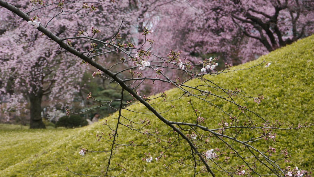 Koishikawa Korakuen: A Walk in The Park