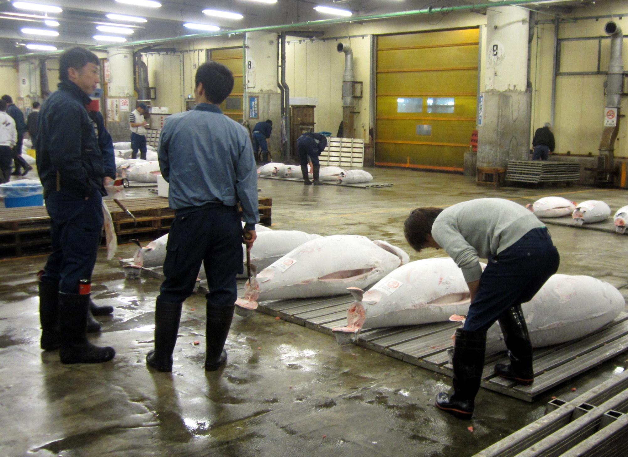 Com com manga cafe cheap place to sleep for tsukiji market for Japan fish market