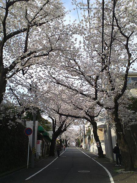 Sakuragaoka Guide