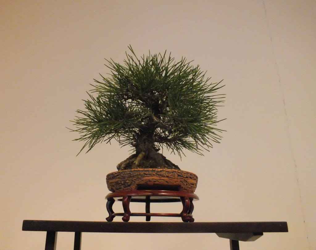 Cheapo Weekend for February 8/9: Bonsai, Craft Markets and Media Arts