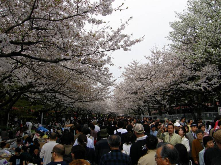 Hanami pic by David, used under a Creative Commons Licence.