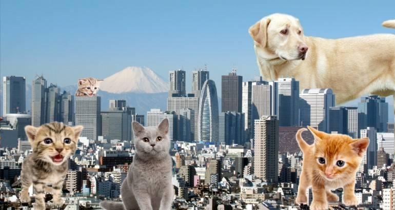Tokyo for beginners - tokyo-landscape