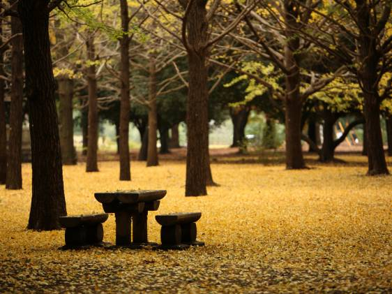 Yoyogi Park in its autumn colours