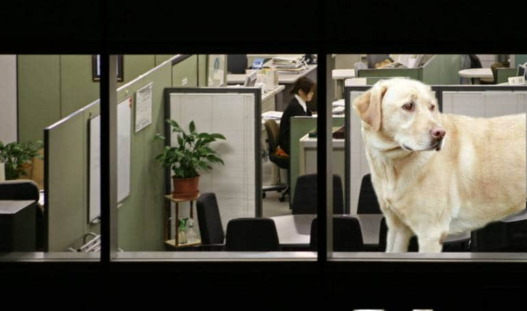 office-dogged