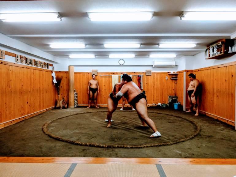 free sumo
