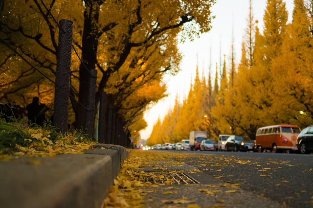 autumn leaves tokyo koyo