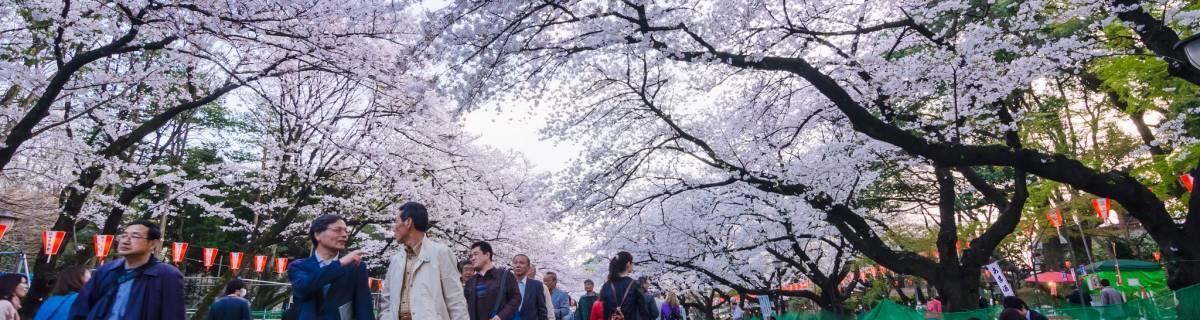 Ueno Guide