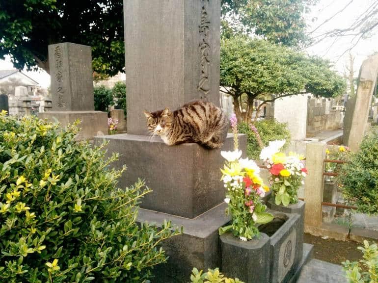 yanaka-cemetary-cat