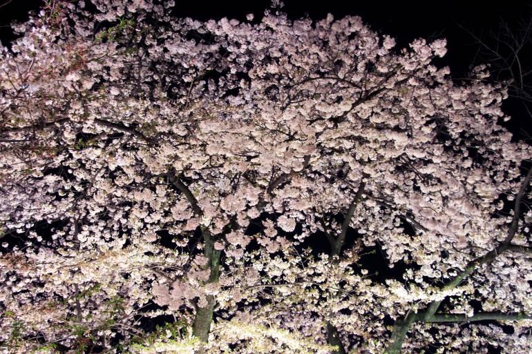 yozakura tokyo