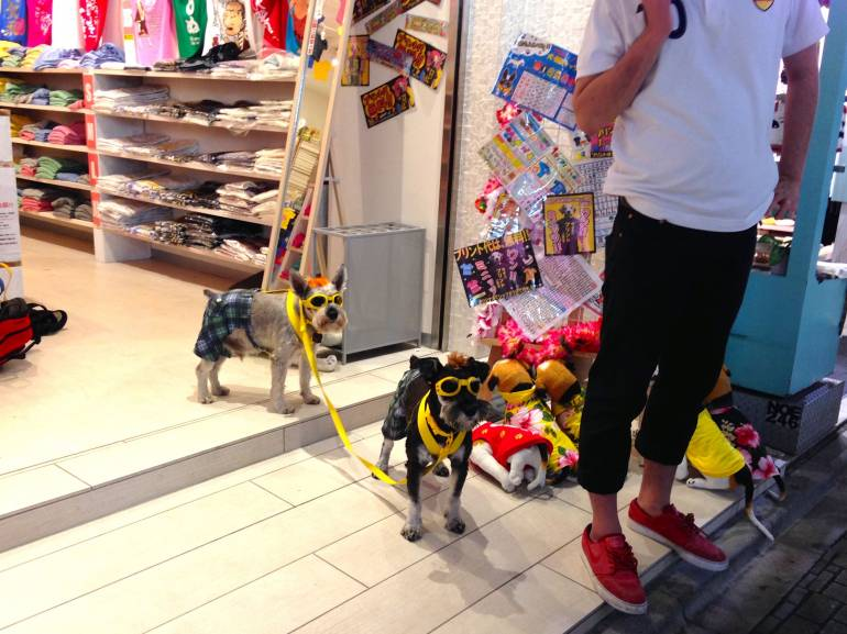 Begged Dogs Bedazzle in Harajuku