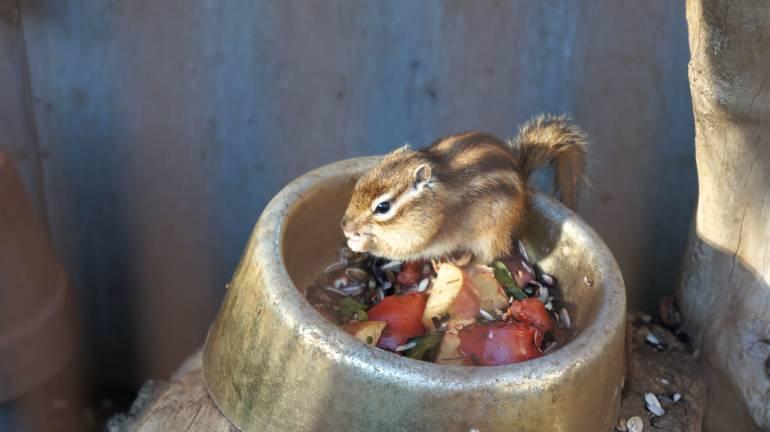 SquirrelParkTC4