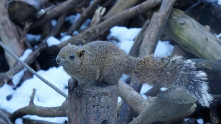 SquirrelParkTC8