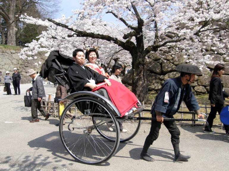 hanami rickshaw kamakura cherry blossom