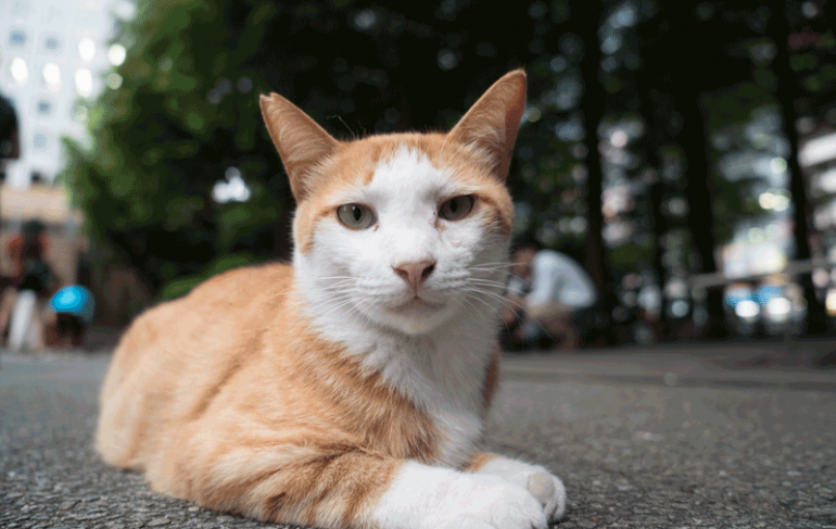 Pets in Tokyo - Ikebukuro_Cat_Park_10