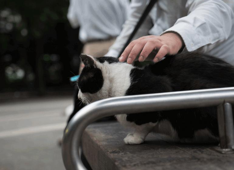Ikebukuro-Cat-Park-17