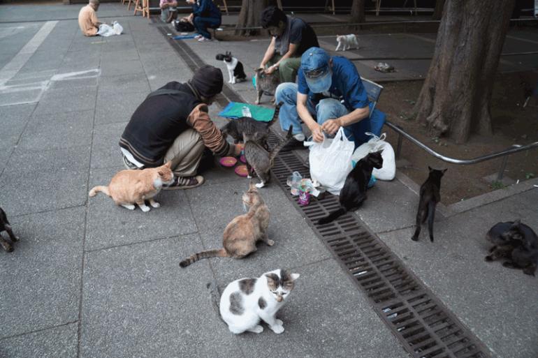 Ikebukuro-Cat-Park-20