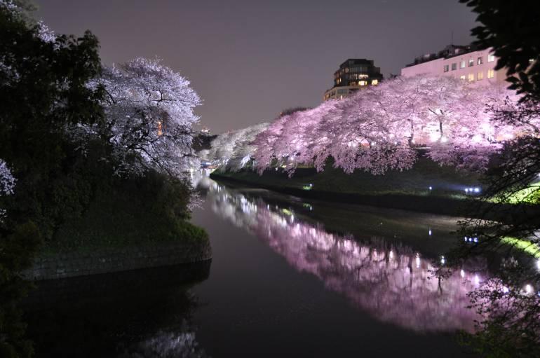chidorigafuchi night cherry blossom - sakura tokyo