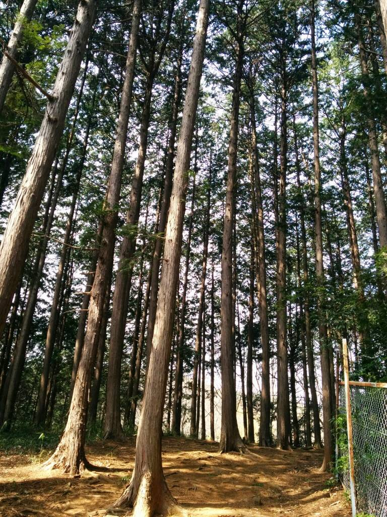 golf-trees