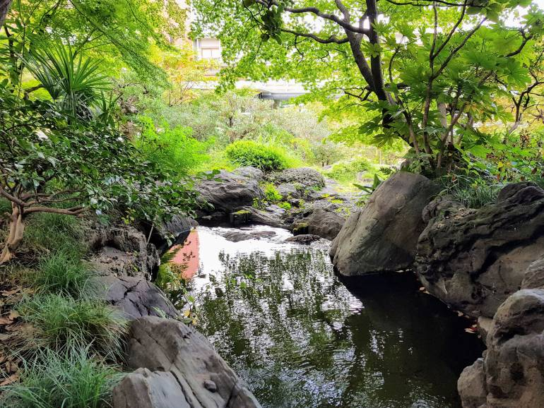 A pond in the International House garden