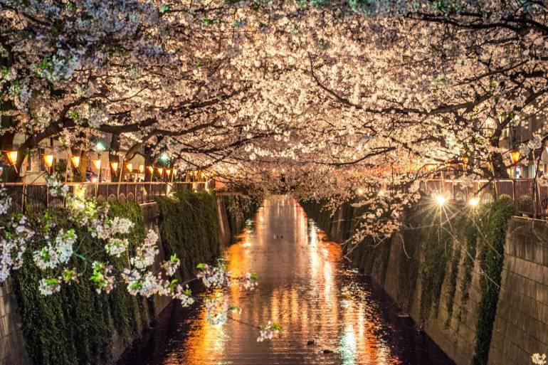 nakameguro hanami - sakura tokyo