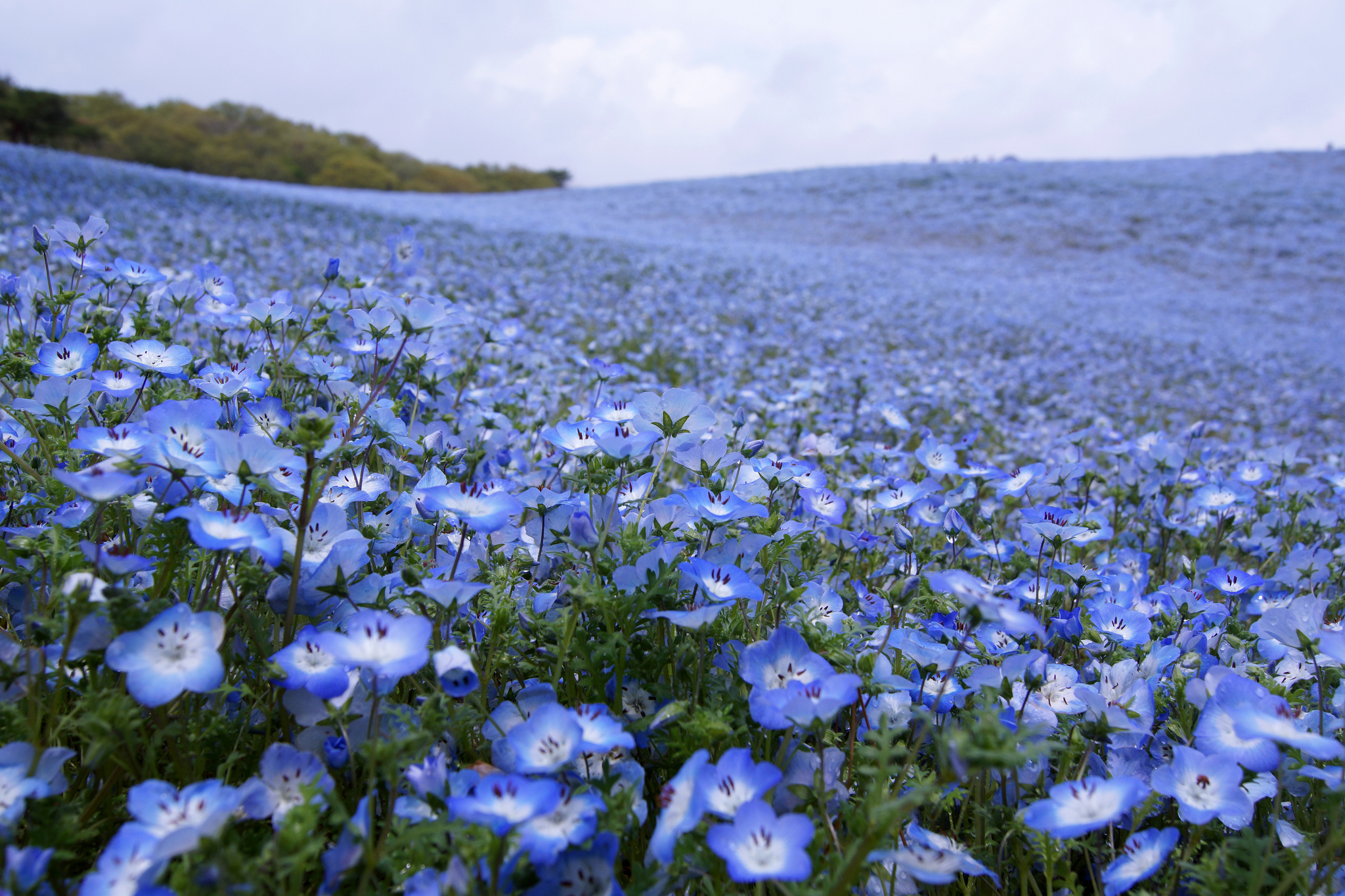 5 tokyo flower festivals to visit this spring tokyo cheapo mightylinksfo