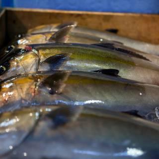 Hirobumi Morita Interview: Tips From a Pro Buyer at Tsukiji Market