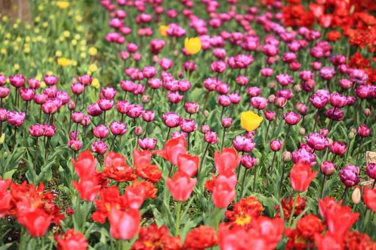 flowers tokyo