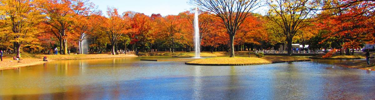 The Cheapo Guide to Yoyogi Park