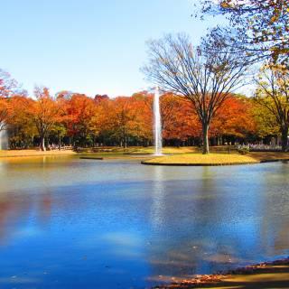 The Cheapo Guide to Yoyogi Park