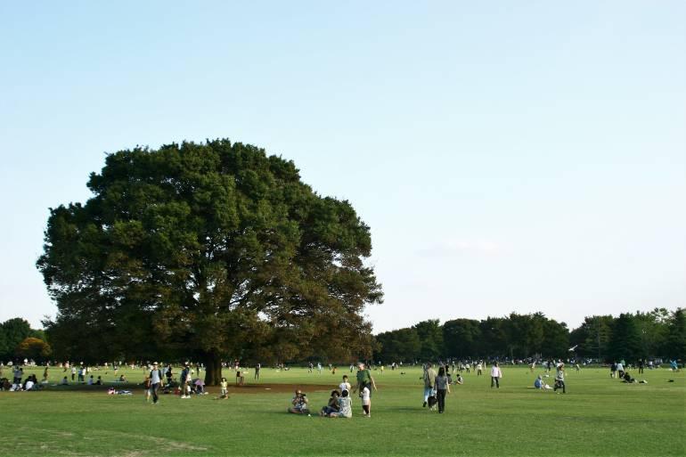 showa kinen picnic spot tokyo