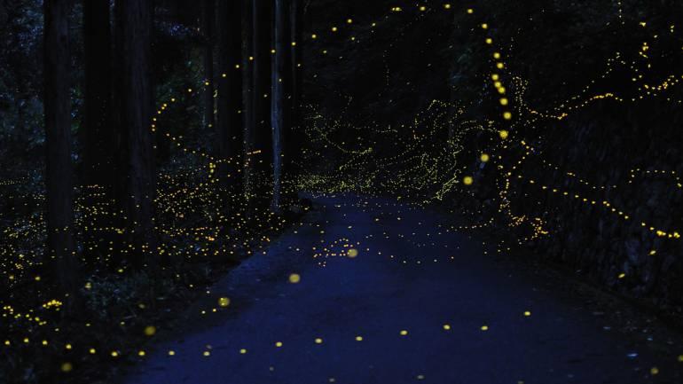 tokyo firefly