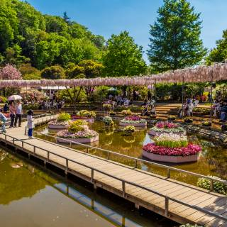Ashikaga City: Famous Wisteria and Ancient Colleges