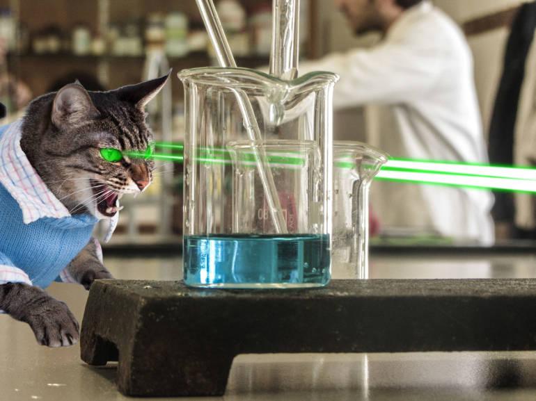 lab-cat