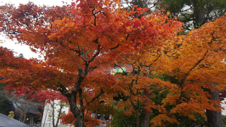 Autumn leaves, Nikko, Tochigi Prefecture
