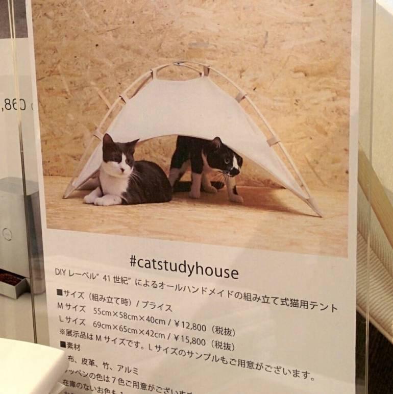 cat-study-house