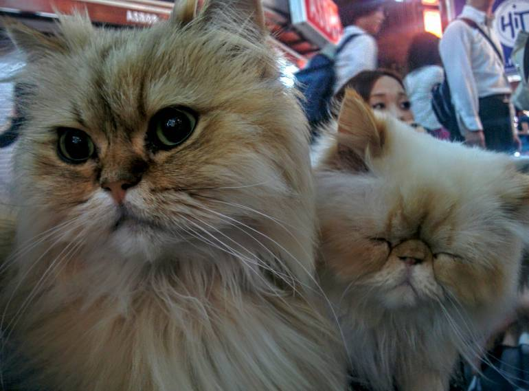 close-up-cats