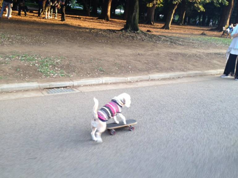 skating-dog
