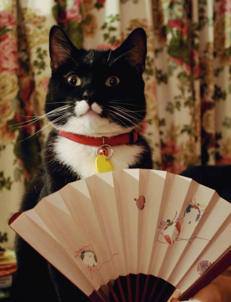 cat-fan