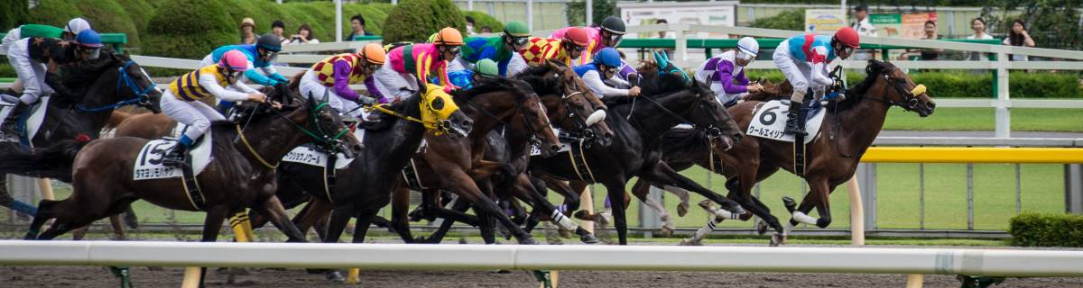 Tokyo Racecourse: Beer, Betting and Thoroughbreds