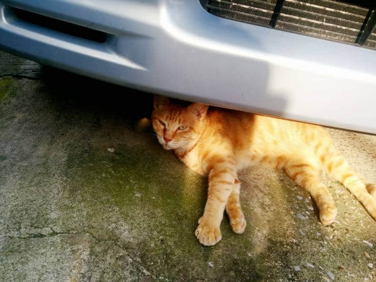 orange-cat-under-car-yanaka