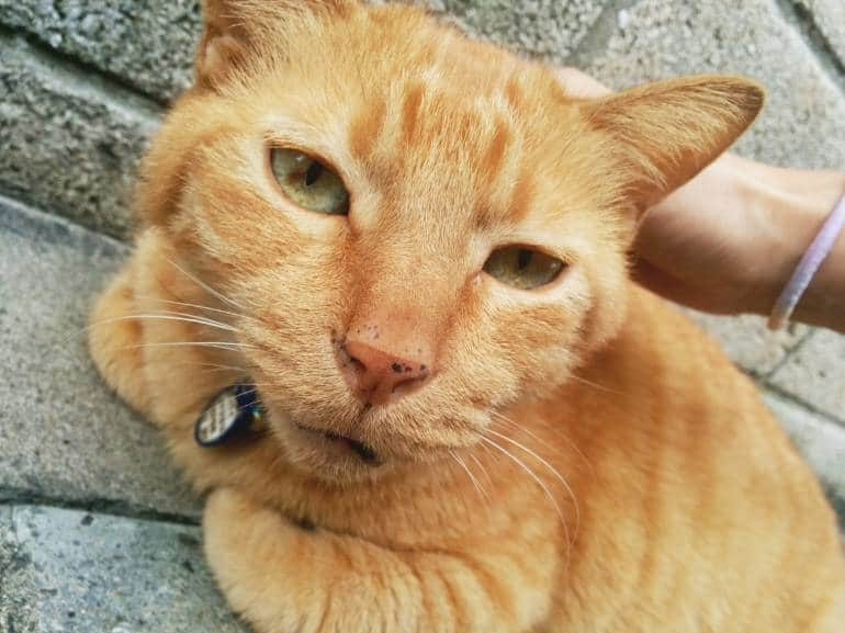 tabby-cat-yanaka