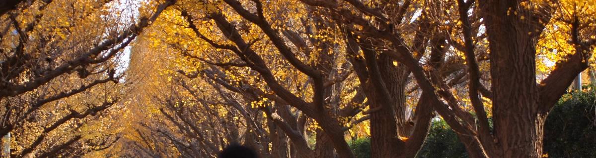 Cheapo Weekend for Nov 14-15: Autumn vs. Winter